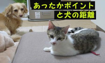 おっさんと猫の距離