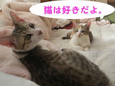 やさしくしてくれる猫は好きだよ。