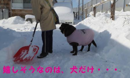 雪大好きの犬