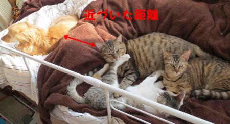 動物専用ベッド