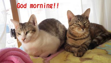 おはようございます