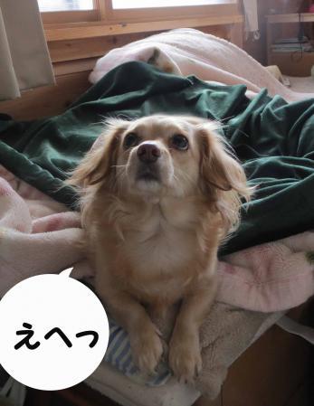 おっす、俺おっさん犬