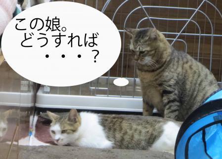 おっさん猫考える