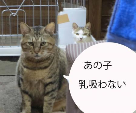 おっさん猫の不満