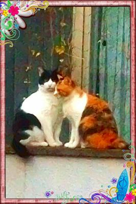 ネコのカップル