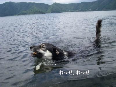 泳いでるんだよ