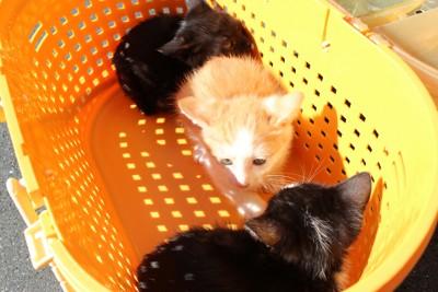 3匹の子猫