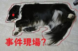 DSC_2677 - コピー (2)