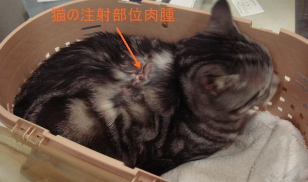 猫の注射部位肉腫