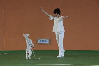 141116阿部ゲンの替りの犬の演技