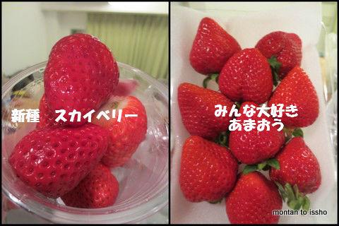 いちご食べ比べ-001