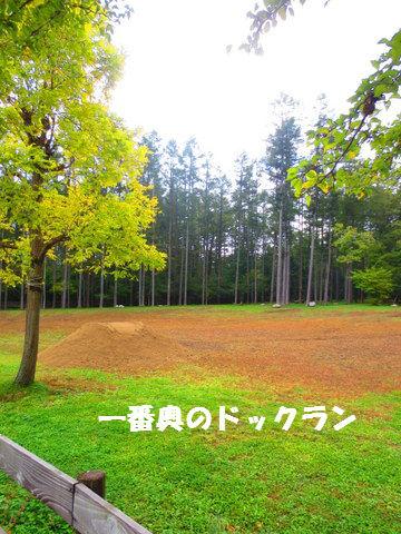 IMG_2661.jpg
