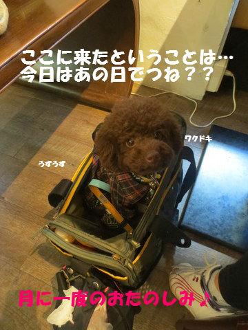 IMG_2969.jpg