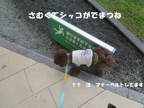 IMG_3129.jpg