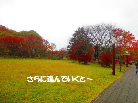 IMG_3156.jpg