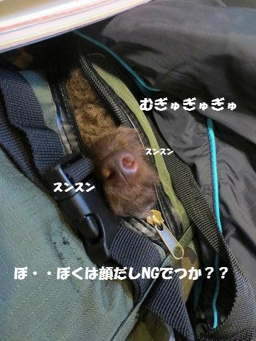IMG_4050.jpg