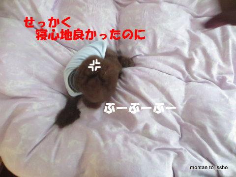 IMG_5381.jpg