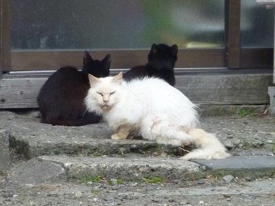 猫の集会所