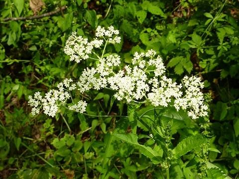この白い花は・・・
