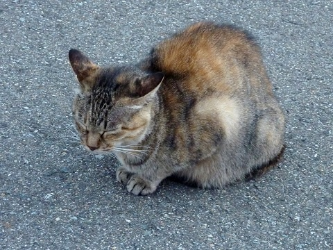 母さん猫?