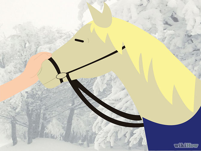 670px-Care-for-Your-Horse-In-the-Winter-Step-11.jpg