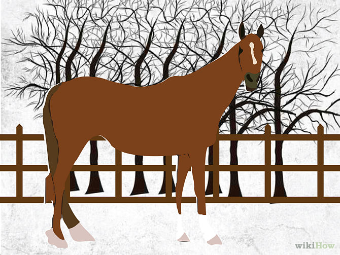 670px-Care-for-Your-Horse-In-the-Winter-Step-8.jpg