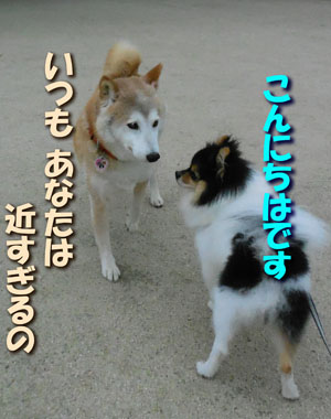 DSCN0852.jpg