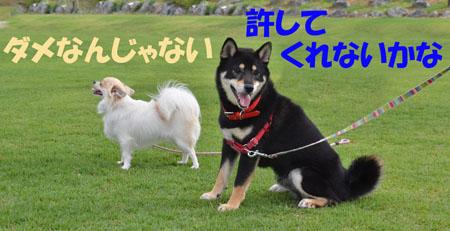DSC_9357_20130707163626.jpg