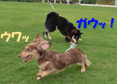 DSC_9367_20130707163625.jpg