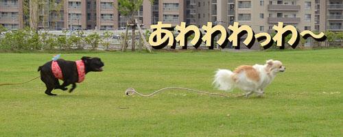 DSC_9378.jpg