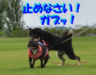 DSC_9383_20130707163741.jpg
