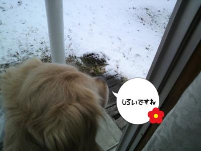 雪の朝ですね