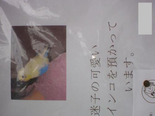 photo206-26.jpg