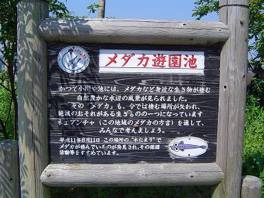 メダカ遊園池