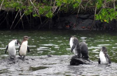 Bird-Penguin-IsabelaPier.jpg