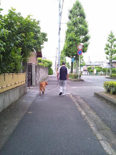 20120609朝散歩 1コピー
