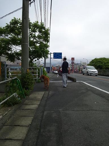 20120609朝散歩 5コピー7