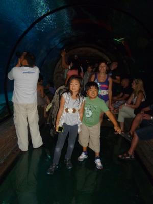シャークリーフ水族館