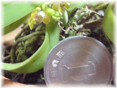 1円玉と比較