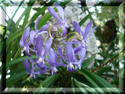 2度目の花