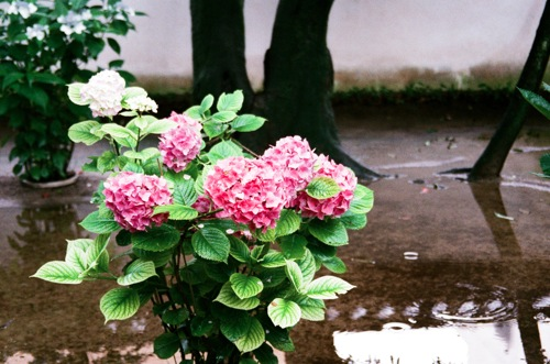 natura_09590017.jpg