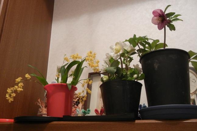 20130113kurirokaika1.jpg