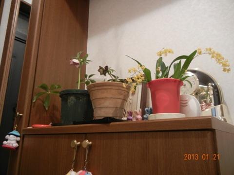 20130122kurirokaika.jpg