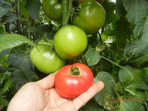 tomatojambosweet120714.jpg