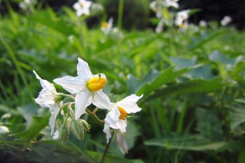 2013-0723-whiteflower.jpg