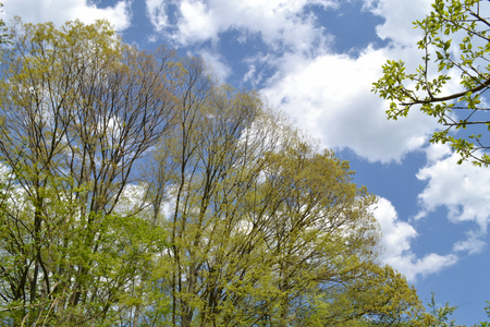 青い空と白い雲と新緑と129