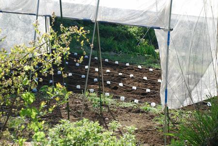 ピーナッツの種蒔きとブルーベリー8
