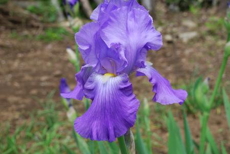 花の構造19