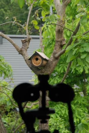 巣箱と双眼鏡1