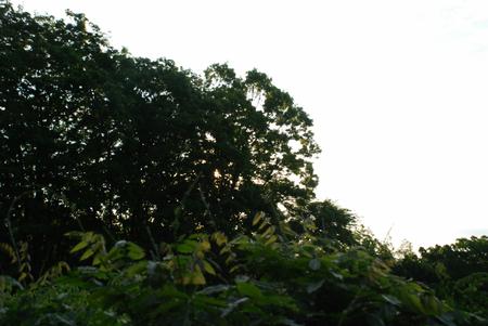 林の向うに太陽が15